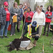 Volunteers planted 77 trees on IU Northwest campus for Arbor Day